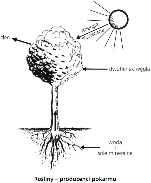 Rośliny - producenci pokarmu