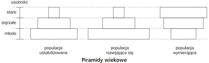 Piramidy wiekowe. Osobniki: stare, dojrzałe, młode. Populacja ustabilizowana, populacja rozwijająca się, populacja wymierająca.