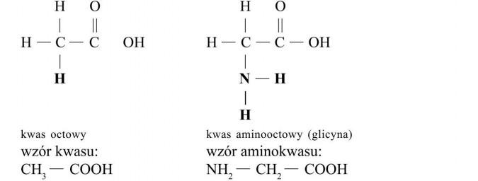 Białka - budowa i właściwości. Kwas octowy, kwas aminooctowy (glicyna). Wzór kwasu, wzór aminokwasu.