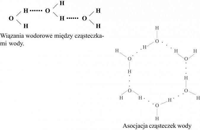 Wiązania wodorowe między cząsteczkami wody. Asocjacja cząsteczek wody.